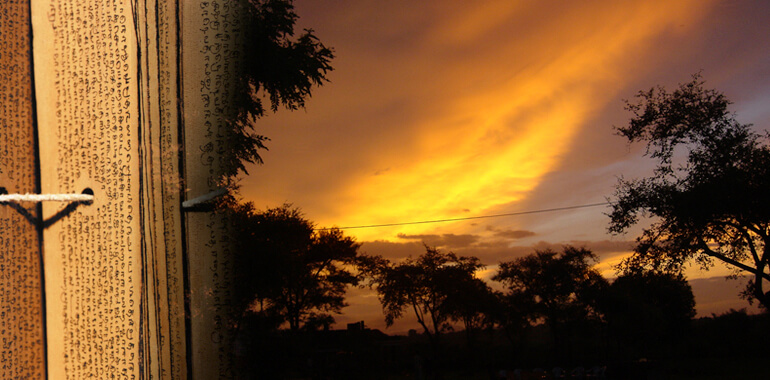 Дорогами судьбы — феномен пальмовых листьев